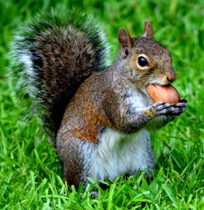 squirrel_and_his_nut_by_rosexdarkxheart-d5064su